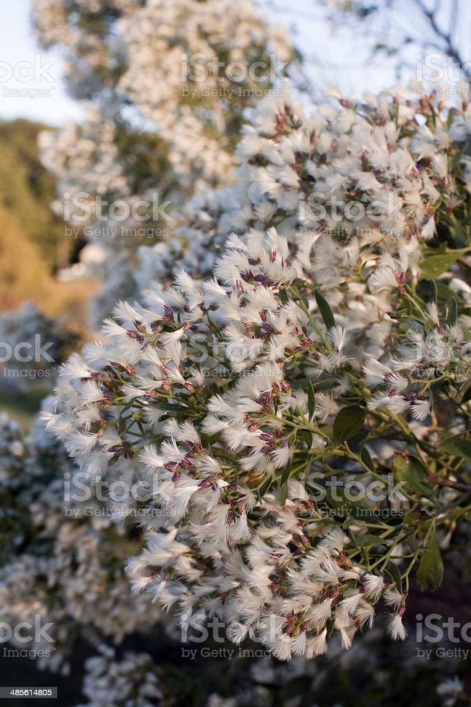 Autumn bloom in coastal virginia stock photo
