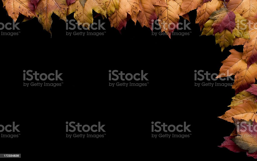 Autumn Border II royalty-free stock photo