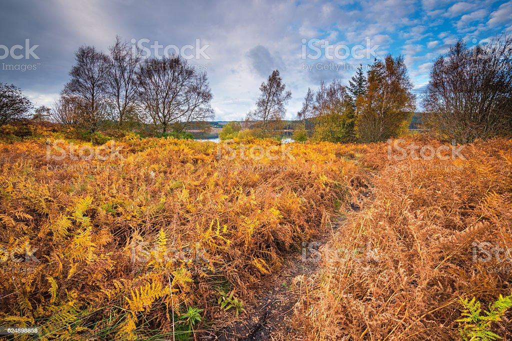 Autumn bracken on shore of Kielder Water stock photo