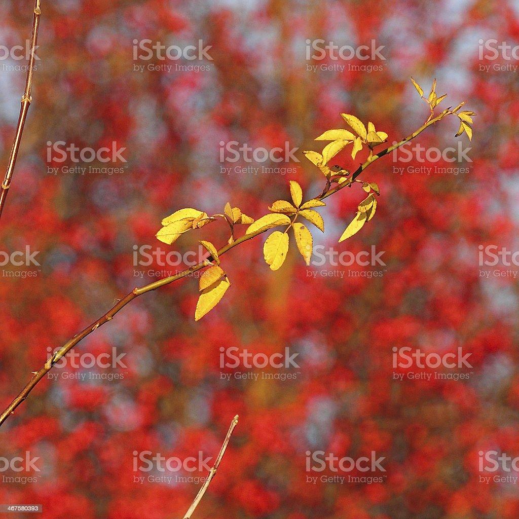 Branche d'automne photo libre de droits