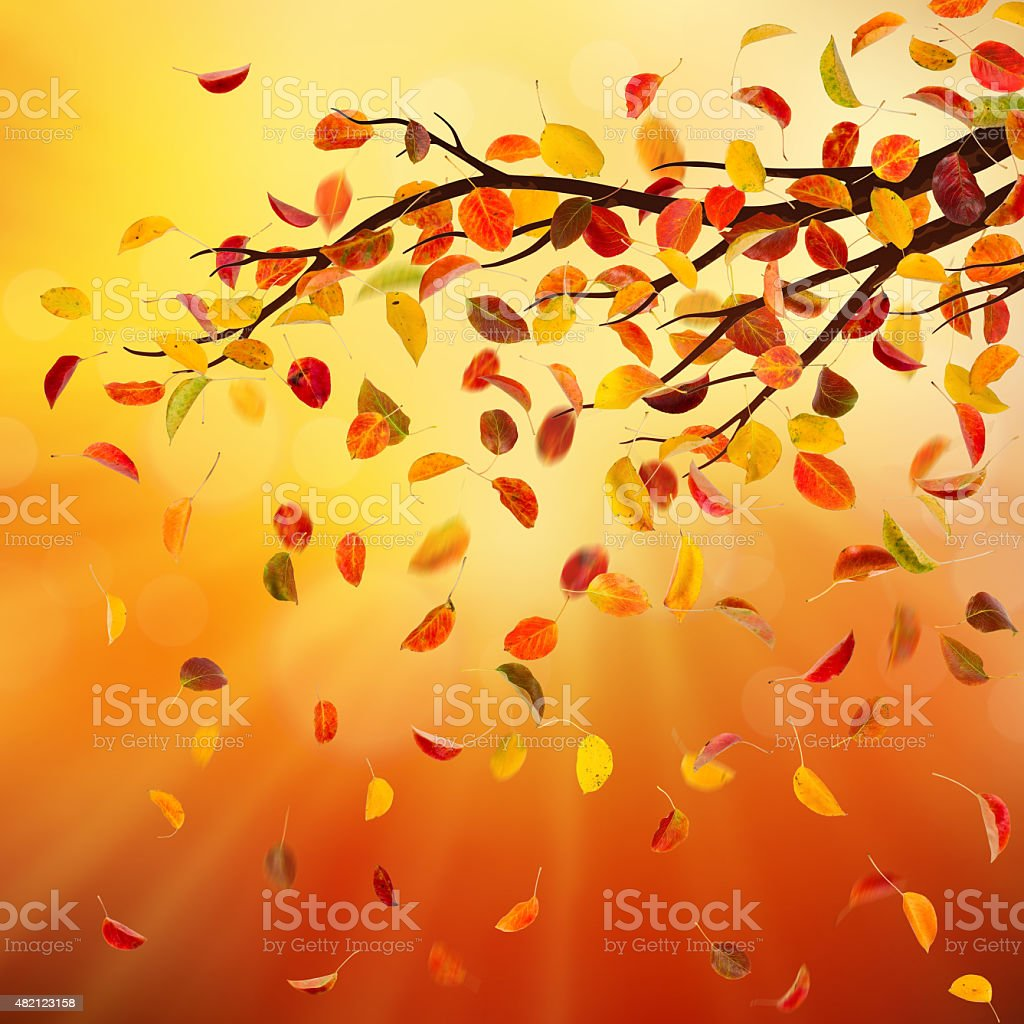 Autumn branch stock photo