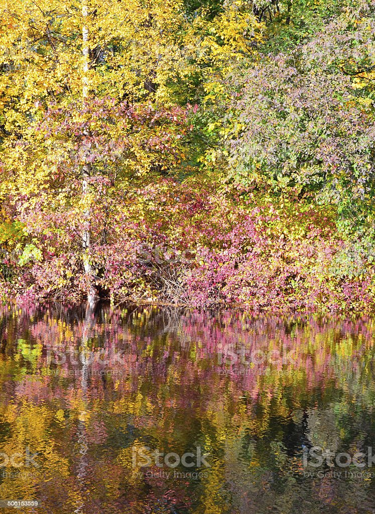 Outono Bush foto de stock royalty-free
