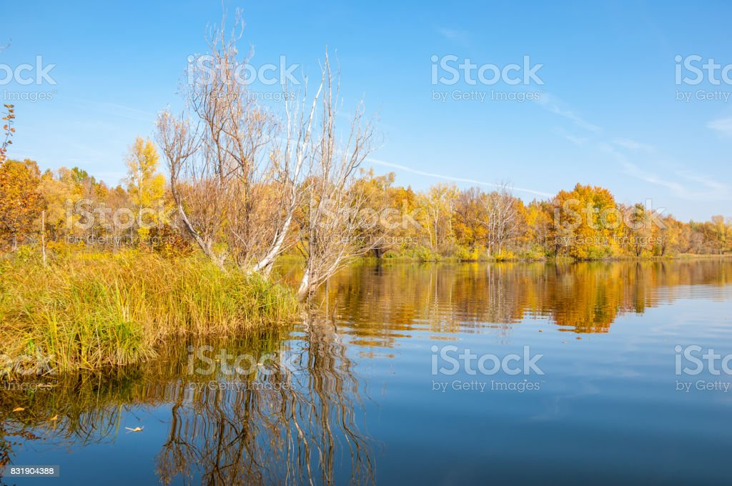 Autumn calm on the lake reflection of trees in water stock photo