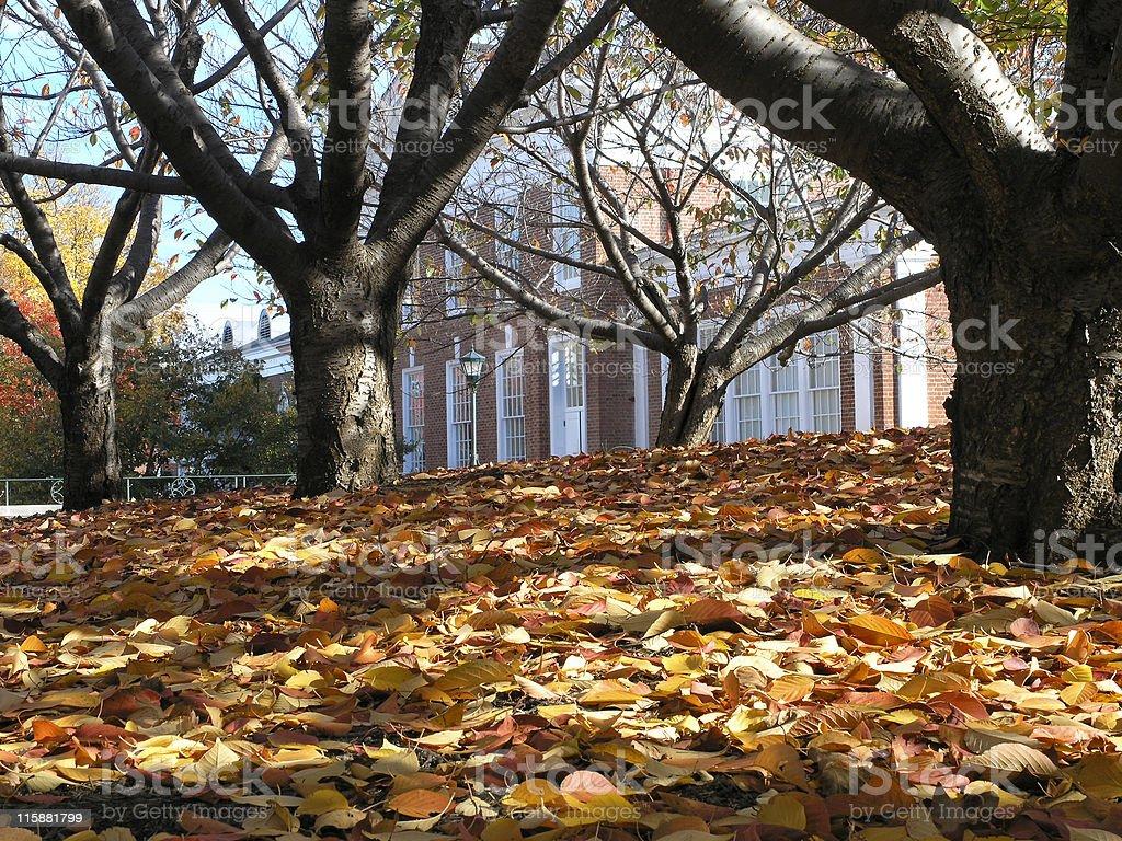 Autumn Campus royalty-free stock photo