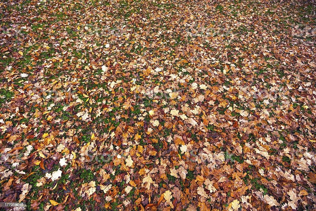 Autumn Carpet royalty-free stock photo