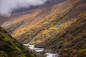 autumn changing color forest in Sagarmatha National Park,Nepal