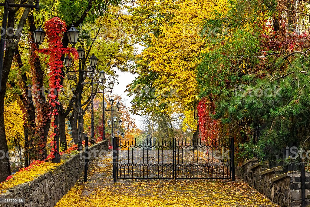 autumn cityscape with foliage and street lamps stock photo
