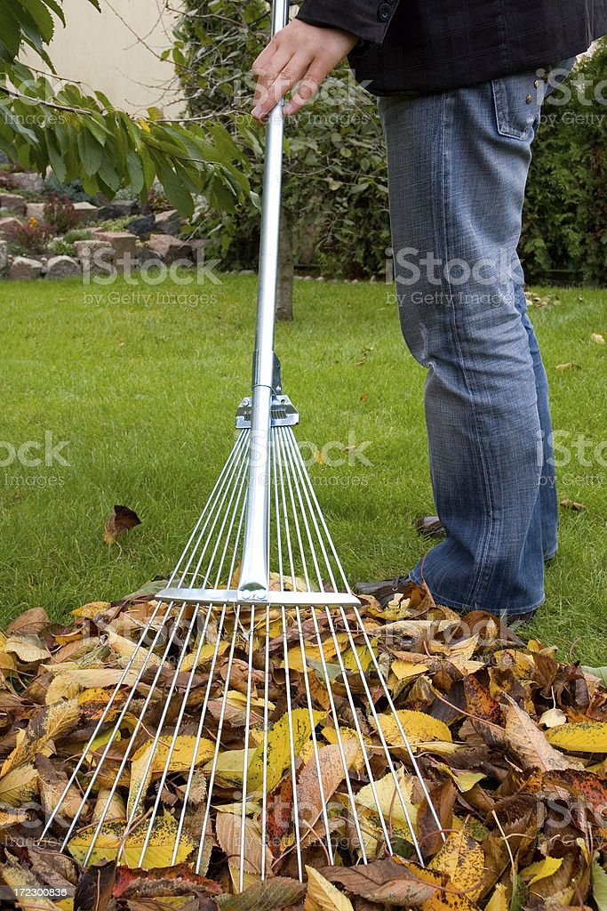 Autumn Clean-up royalty-free stock photo