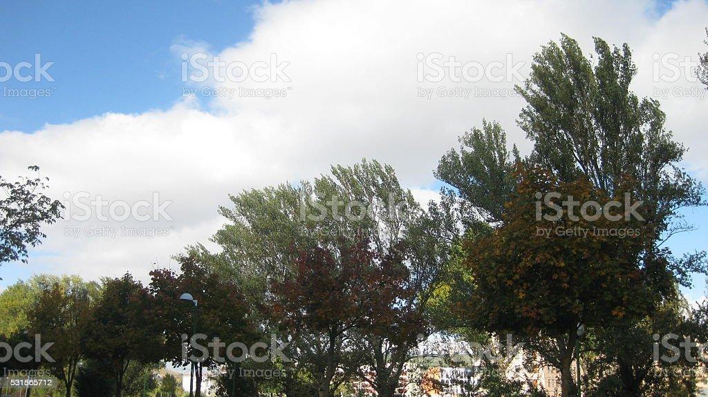 Autumn cold. stock photo