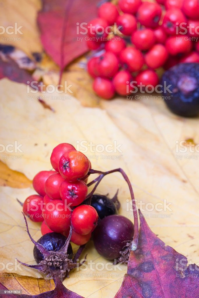 Autumn collection stock photo