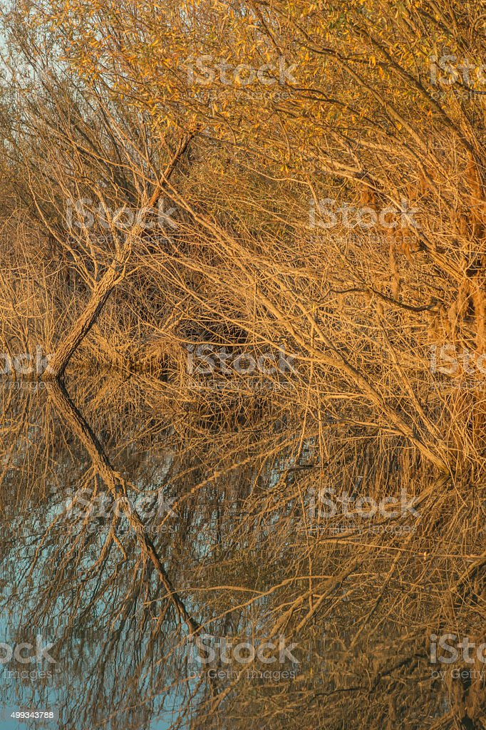 Autumn. Color Image stock photo