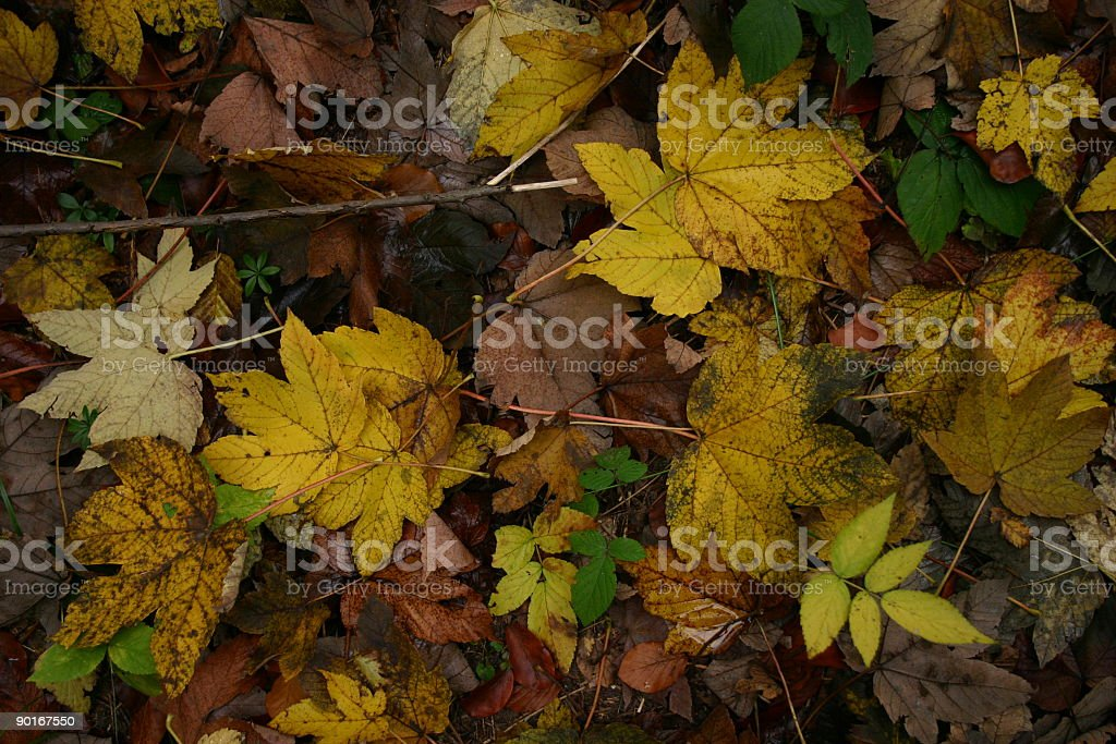 autumn color leafs stock photo