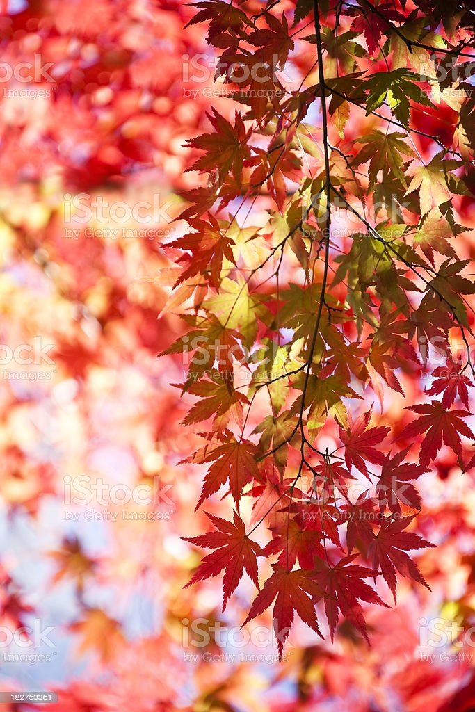 Autumn Color royalty-free stock photo