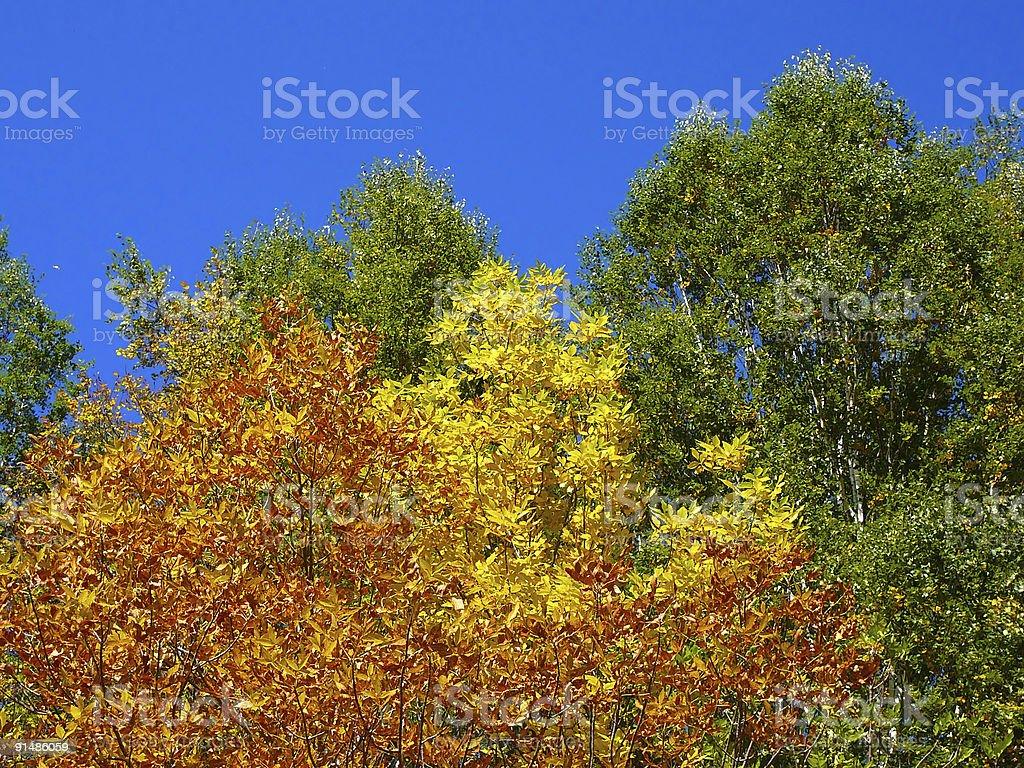 autumn color scene royalty-free stock photo