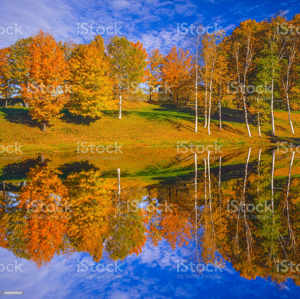 Autumn color sugar maple with pond reflections, VT stock photo
