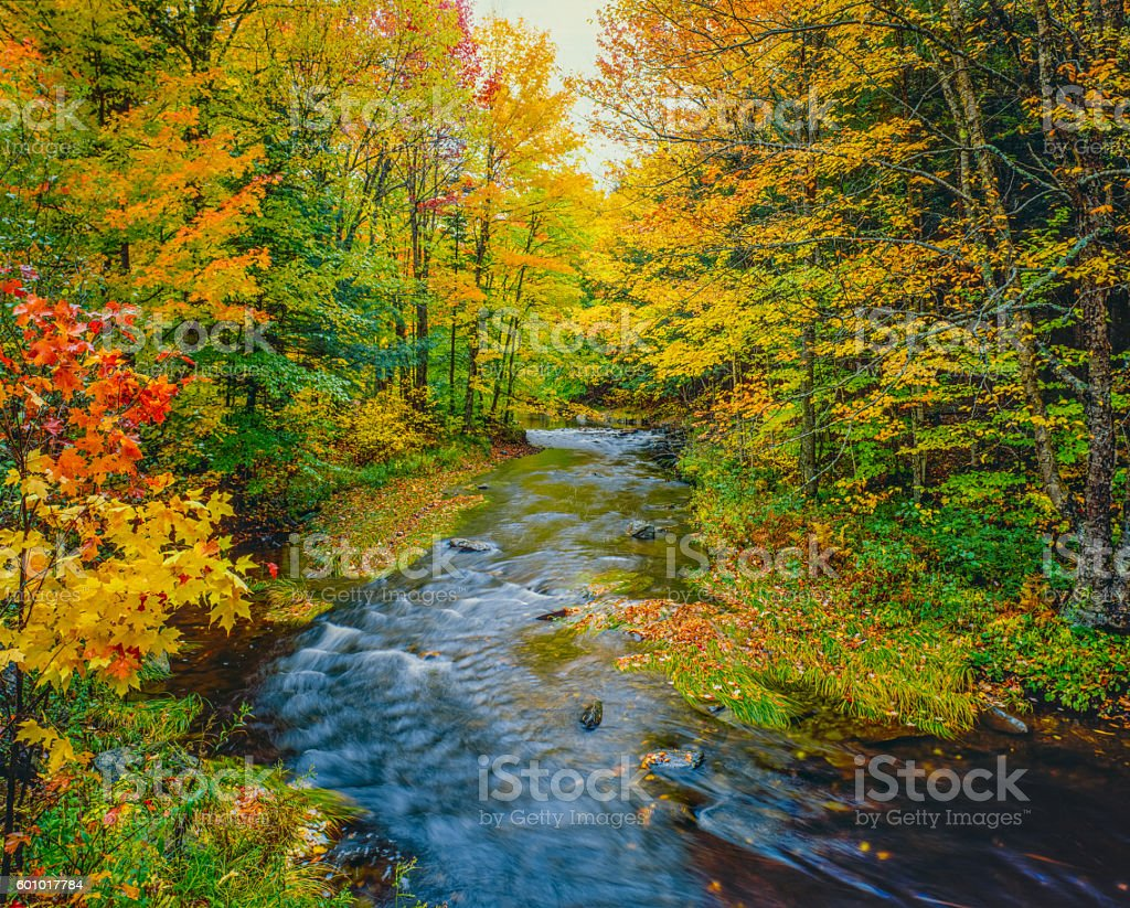 Autumn color with cascading stream Green Mountains,VT stock photo