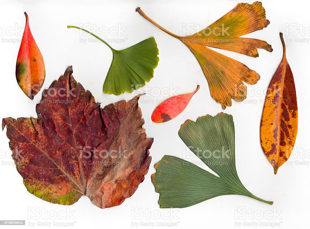 Autumn Colored Fallen Leaves stock photo