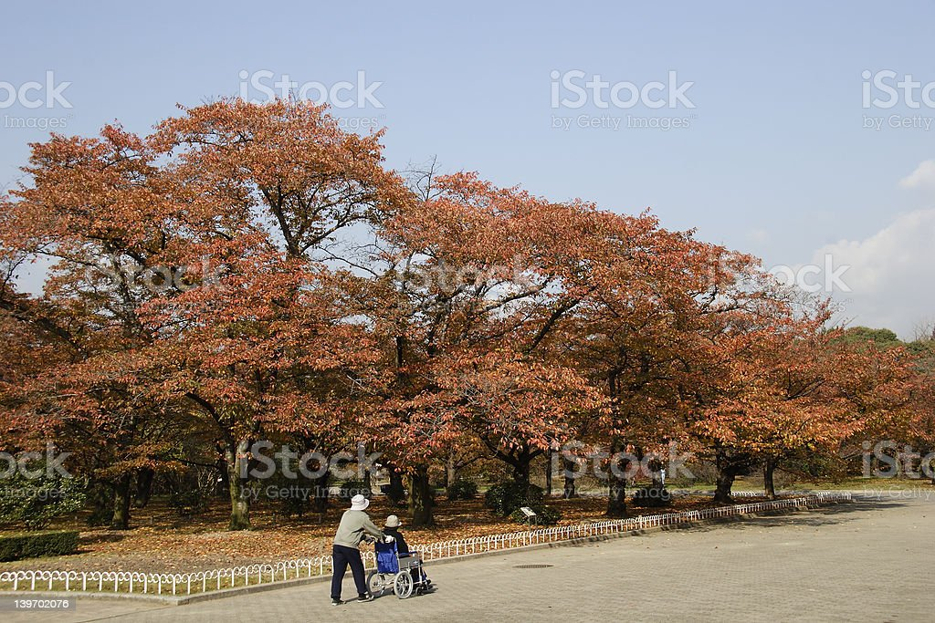 Autumn Colored Leaves royalty-free stock photo