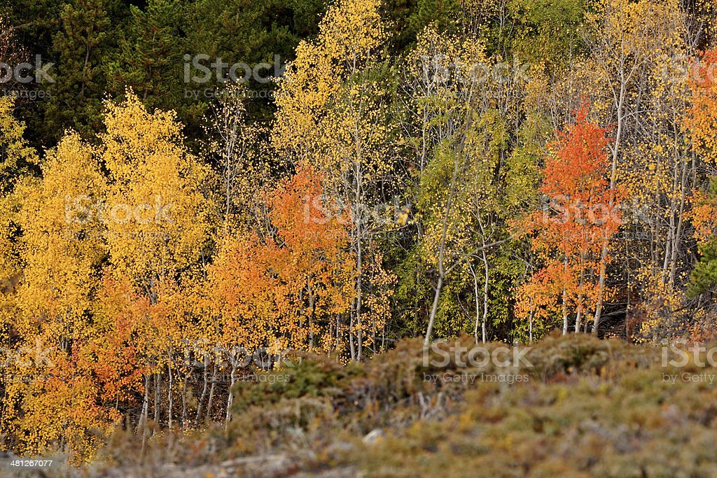 Autumn colored trees on hillside in British Columbia stock photo