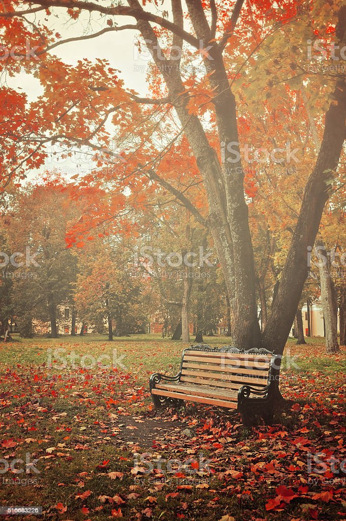 Autumn colorful landscape in misty weather stock photo