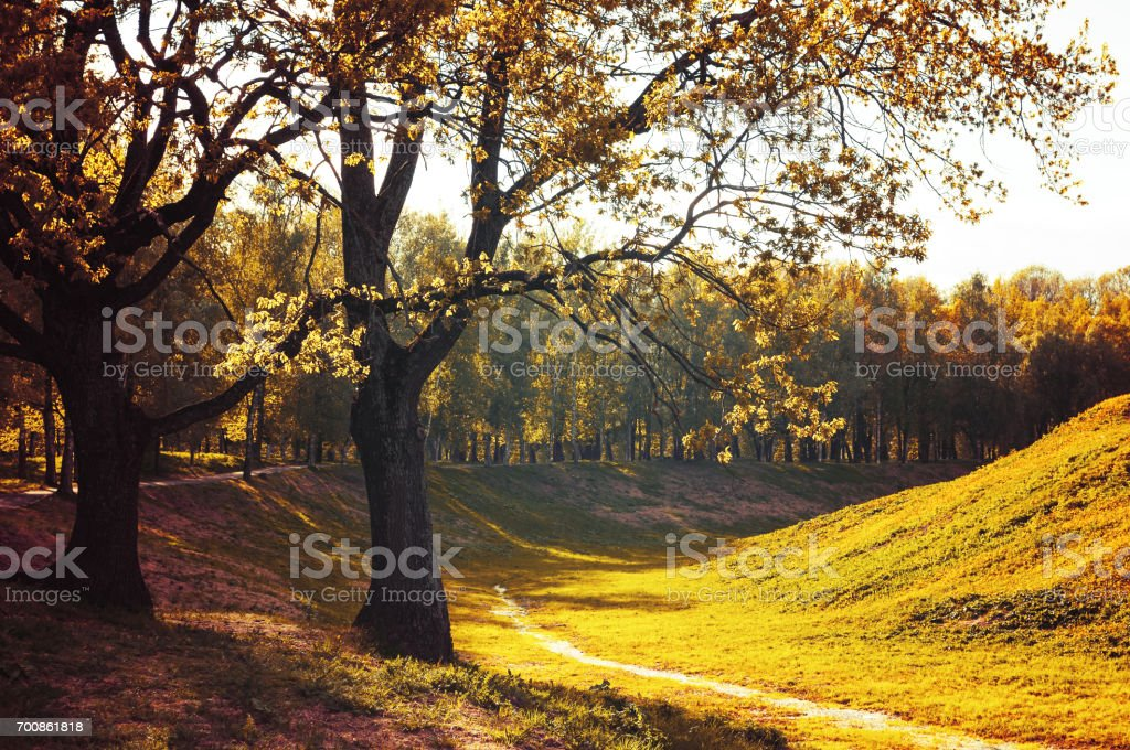 Autumn colorful landscape with autumn trees in sunny autumn weather stock photo