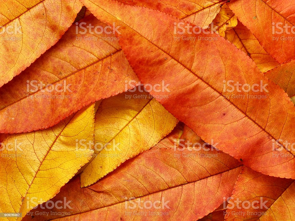 Autumn colorful leaves background stock photo