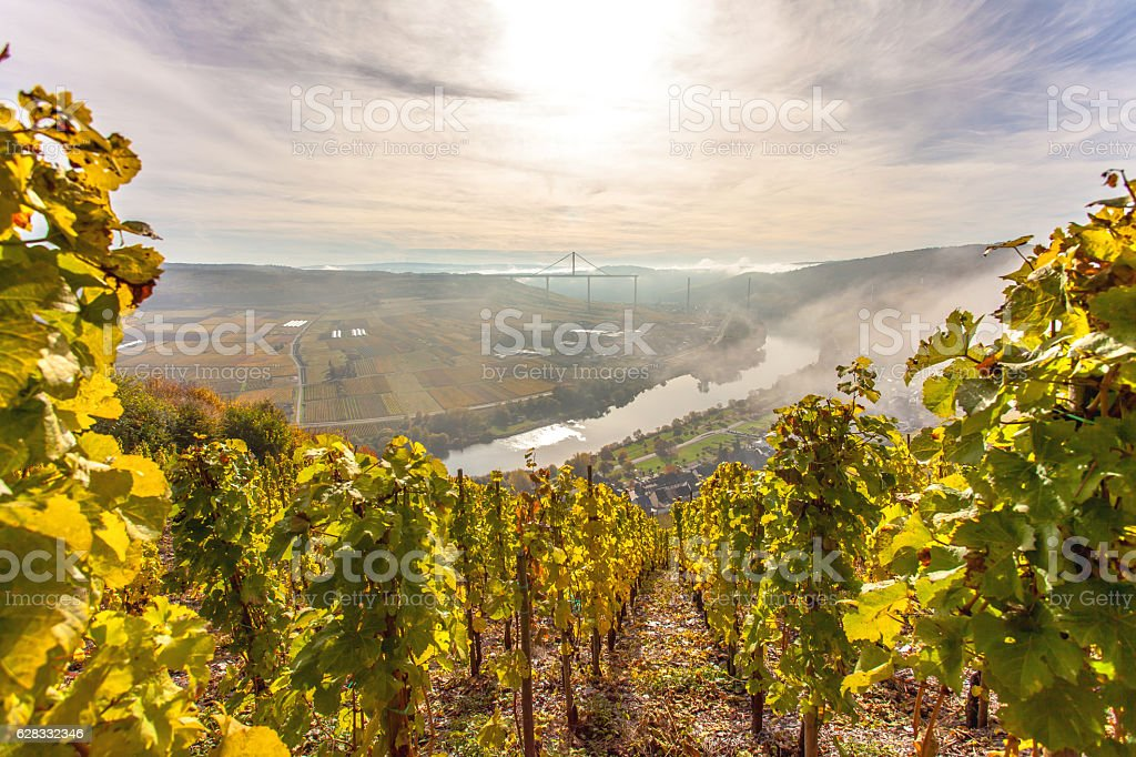 Autumn Colorful Moselle Landscape and Vineyards stock photo