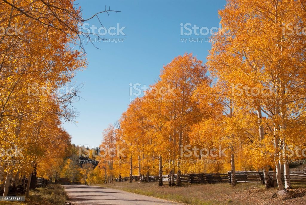Autumn colors along a country road on Cedar Mountain Utah stock photo
