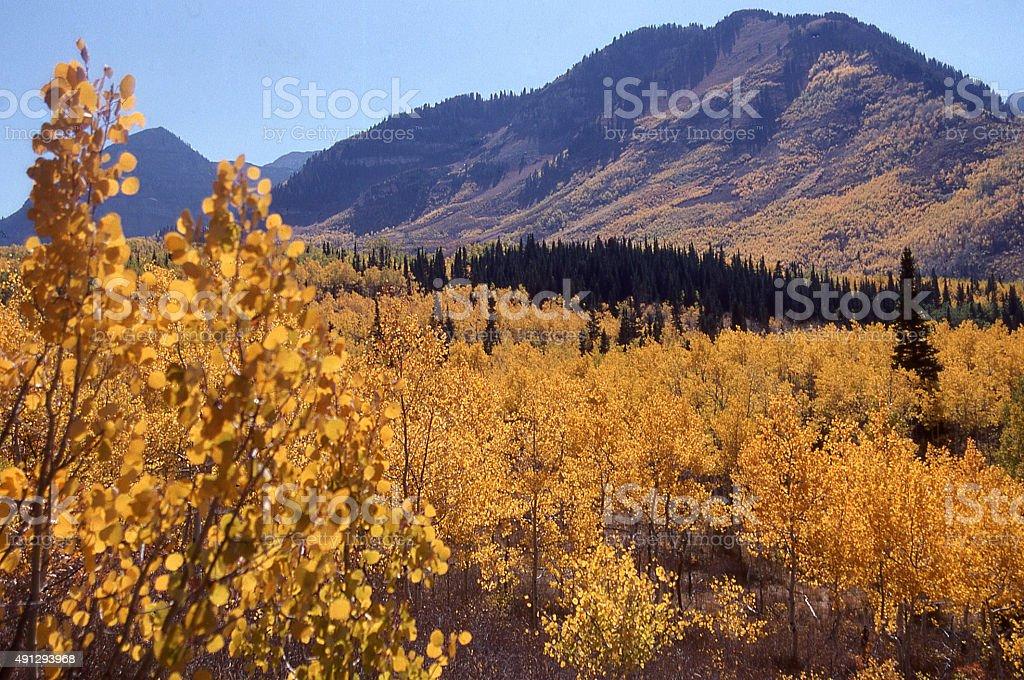 autumn colors and green conifer trees Mount Timpanogos Sundance Utah stock photo