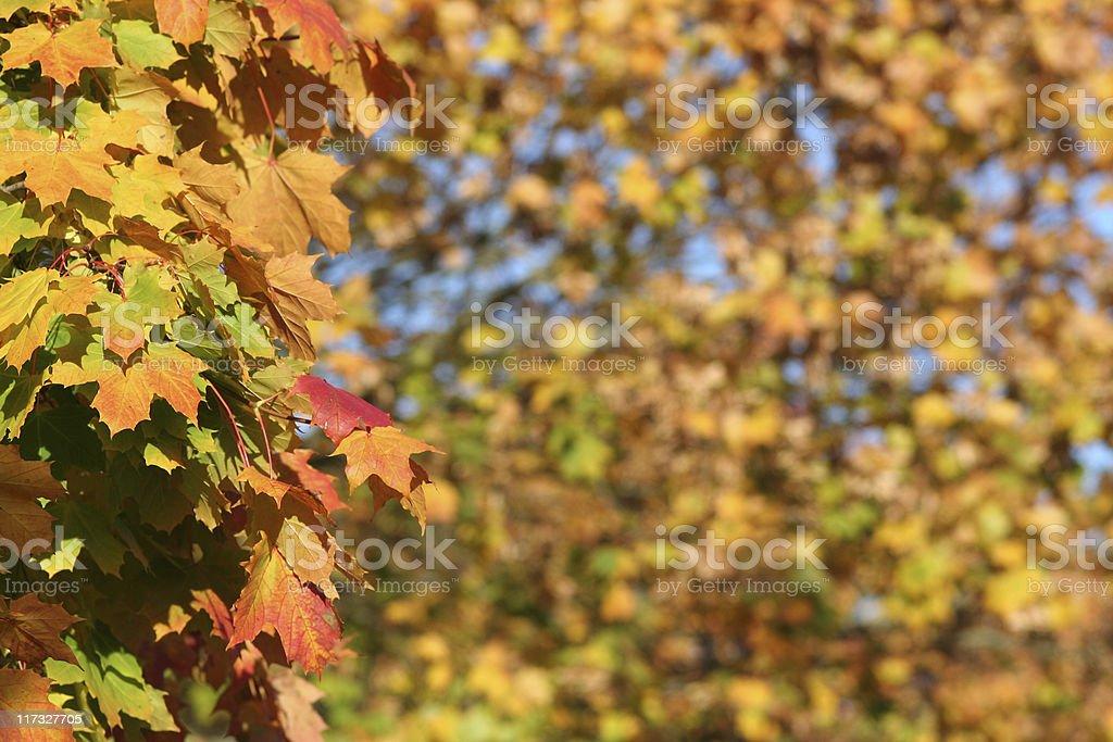Autumn Colors Backgound stock photo