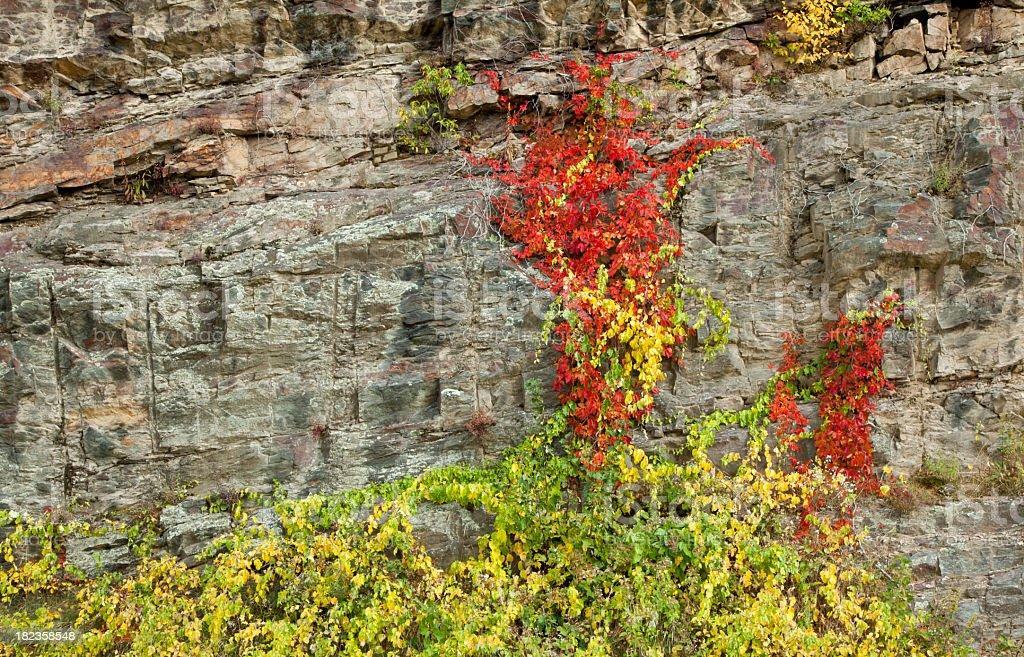Autumn Colors Climbing a Rock Face stock photo