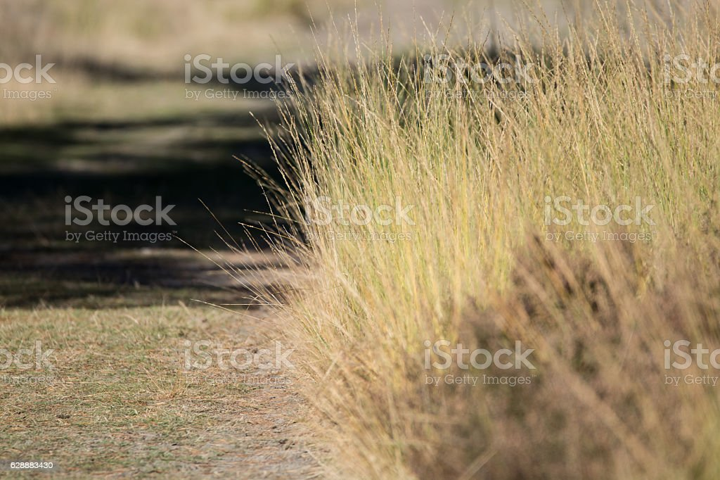 Autumn colors, forest path stock photo