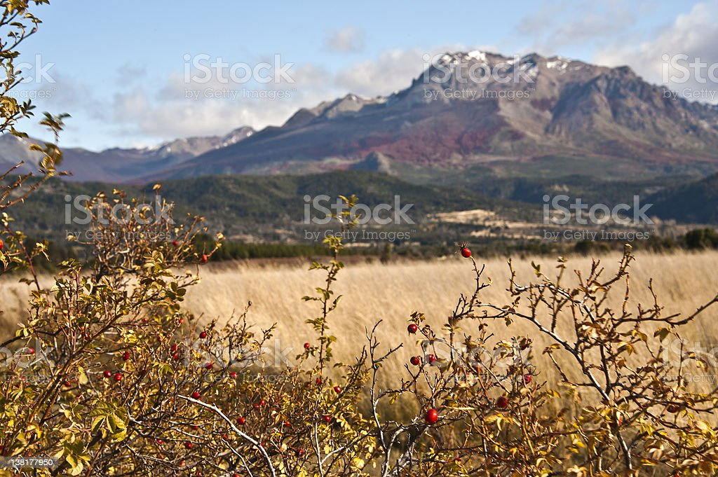 Autumn Colors in El Boliche, Bariloche, Patagonia, Argentina royalty-free stock photo