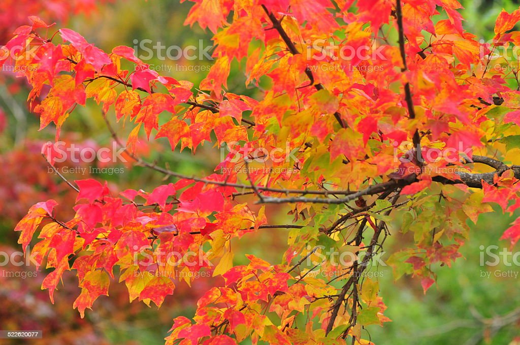 Autumn Colors in Northern Japan stock photo