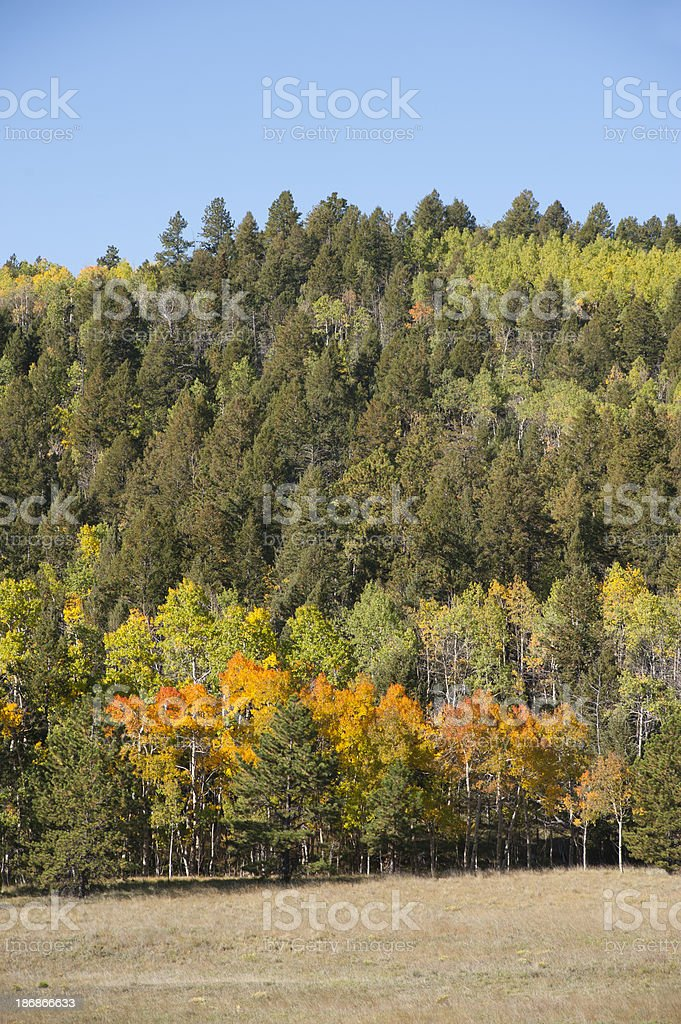 Autumn Colors in the Mountains royalty-free stock photo