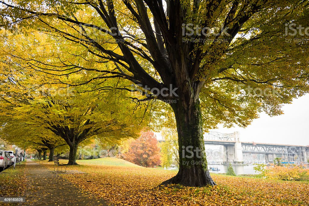 Autumn colors in Vancouver stock photo