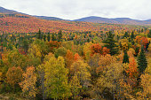 Autumn Colors in White Mountain