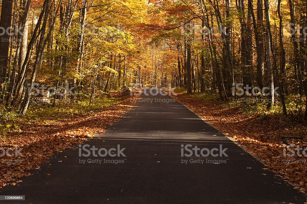 Autumn colors line a road royalty-free stock photo