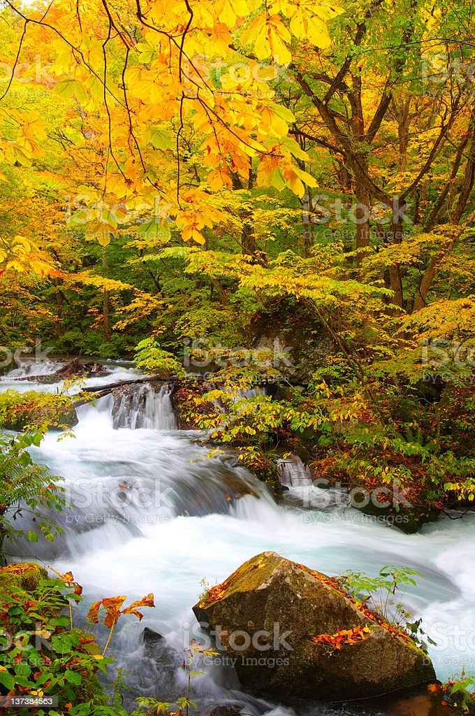 Autumn Colors of Oirase River, located at Aomori Prefecture Japan royalty-free stock photo