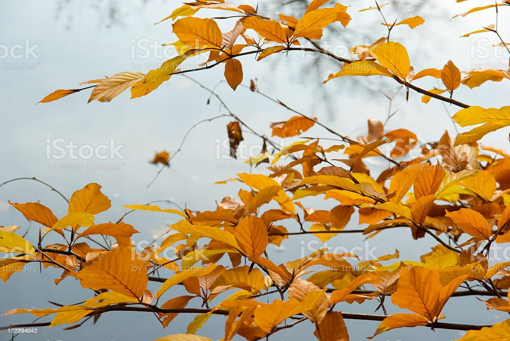 Autumn Colors (Heigenbergerbeek) stock photo