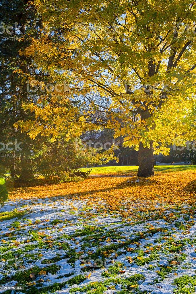 Autumn colors stock photo