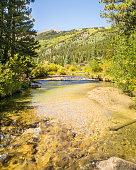 Autumn Colors, Pine Creek, Collegiate Peaks Wilderness, Pike and