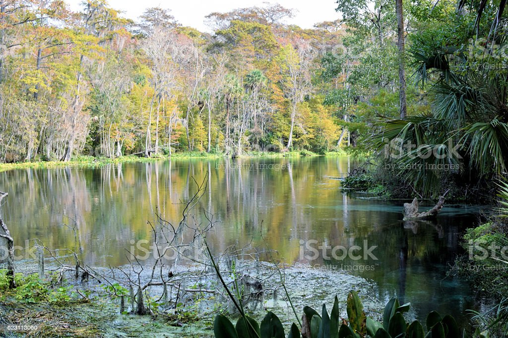 Autumn colors Silver River Silver Springs stock photo