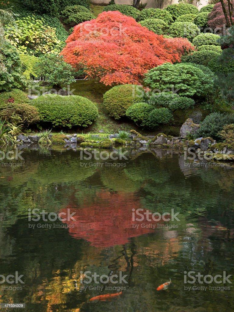 Autumn Colors with Pond Koi at Japanese Garden Portland Oregon royalty-free stock photo