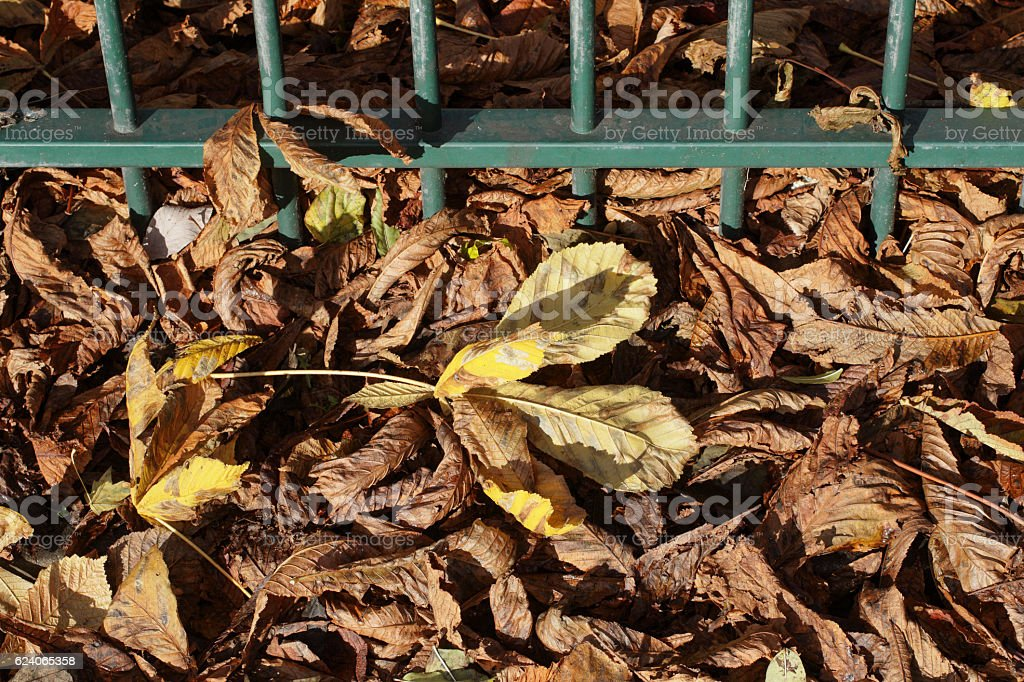 Urban railings with scattering of fallen horse chestnut leaves stock photo