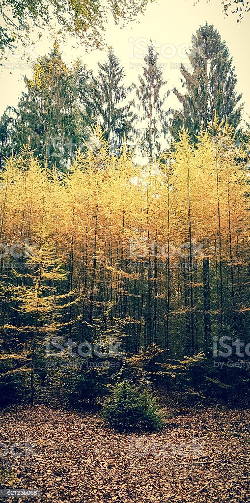 Autumn colours forrest stock photo