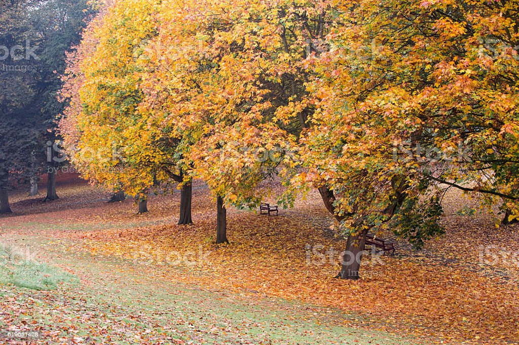 Autumn colours in a park with leaves on the ground stock photo