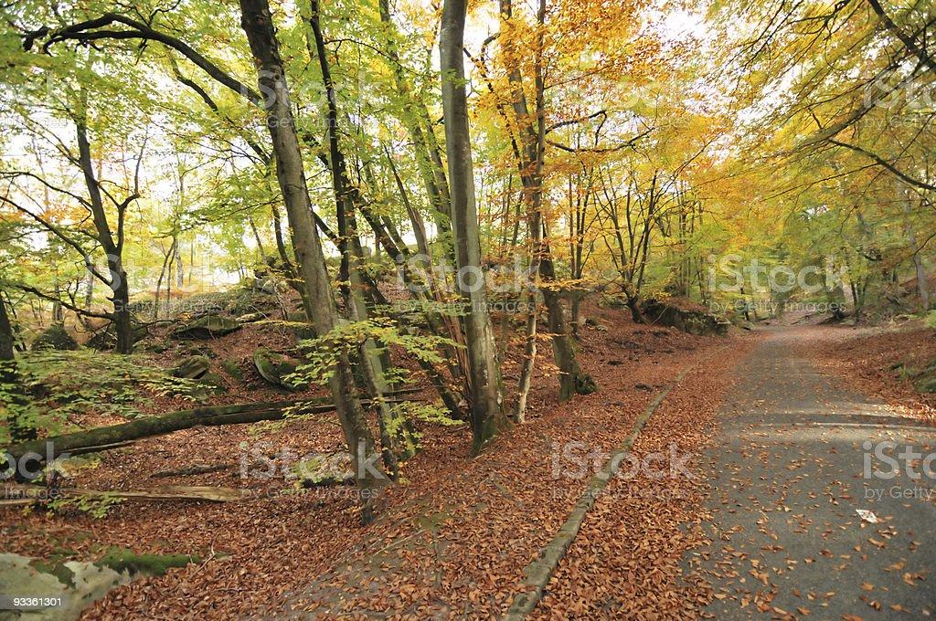 autumn colours in Fontainebleu stock photo