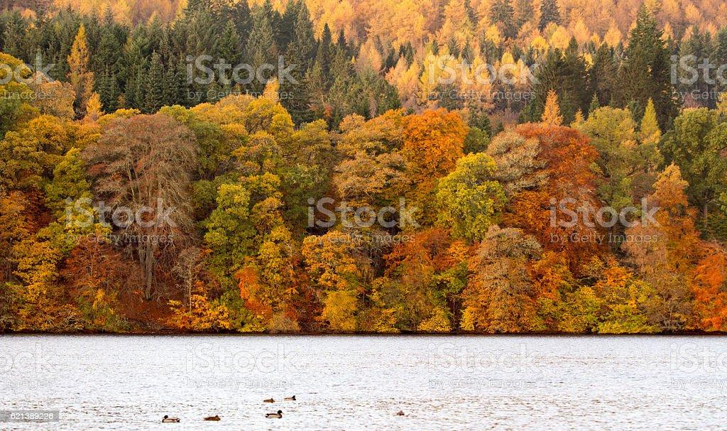 Autumn Colours in Perthshire, Scotland stock photo