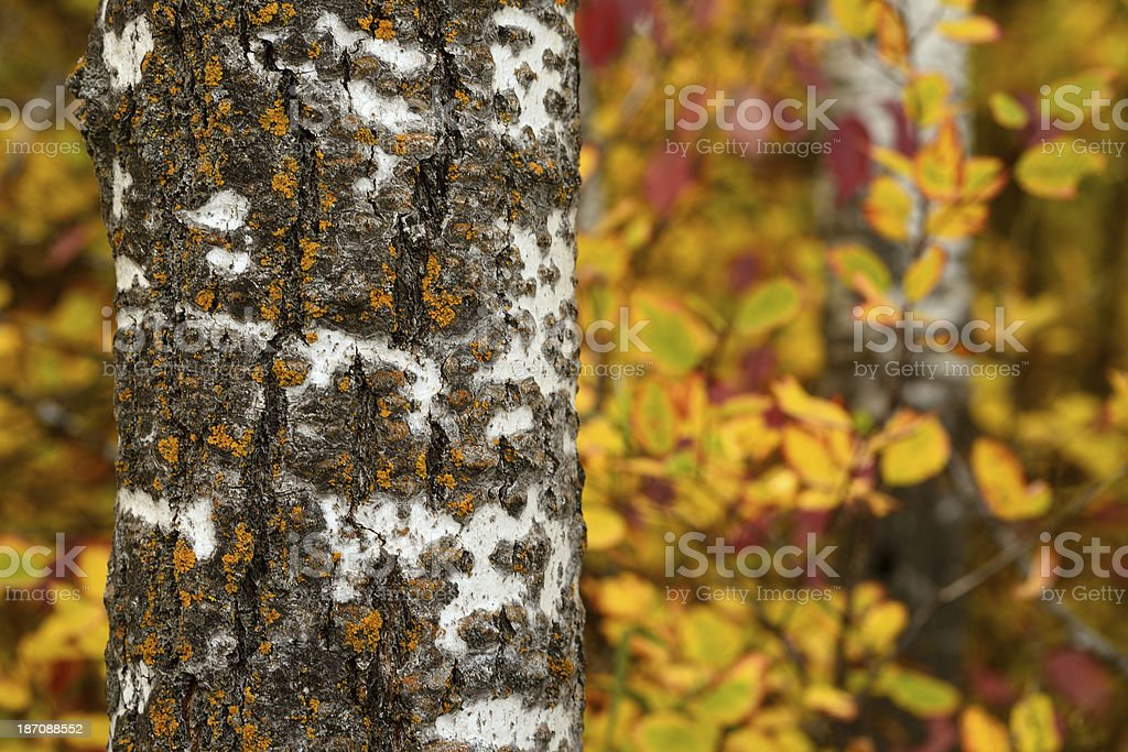 Autumn Colours royalty-free stock photo